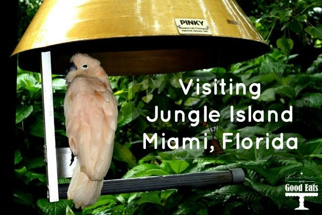 Visiting Miami, Florida? Stop by Jungle Island (formerly Parrot Island) to get up close and personal with a variety of birds. Jungle Island is home to Pinky. the iconic bicycle-riding cockatoo.