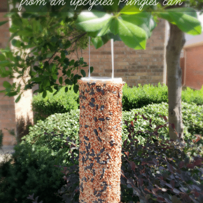 DIY Bird Seed Feeder