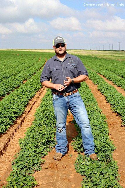 peanut farmer standing in a peanut field